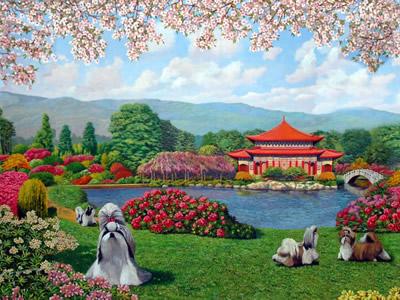 Allevamento ShihTzu Mekong Jiang