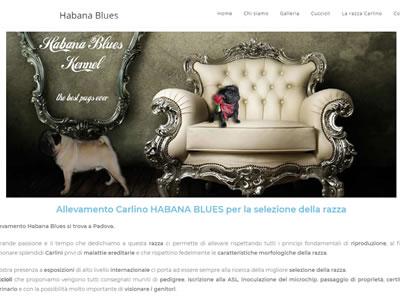 Allevamento Habana Blues
